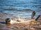 Stock Image : Harbor seal