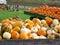 Stock Image : Harvested pumpkins