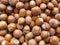 Stock Image : Hazelnuts