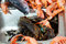 Stock Image : Heap of fresh  seafoods