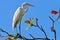 Stock Image : Heron