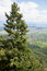 Stock Image : A high fir against the Upper Rhine plain. Alsace, France