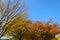 Stock Image : Hikarigaoka park in autumn in Tokyo