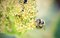 Stock Image : Honey bee on flower