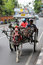 Stock Image : Horse with Carriage at Bali