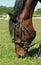Stock Image : Horse eats grass