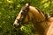 Stock Image : Horse head