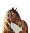 Stock Image : Horse Portrait