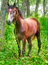 Stock Image : Horse