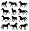 Stock Image : Horse sulhouettes different allures