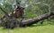 Stock Image :  Horseback het dwars berijden van het land