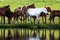 Stock Image : Horses by lake