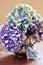 Stock Image :  Hortensieblumen