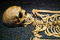 Stock Image : Human Skull and Skeleton Bones
