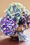 Stock Image : Hydrangea flowers