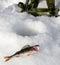 Stock Image : Ice fishing