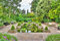 Stock Image : Idyllic garden with pond