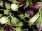 Stock Image :  Inlandse aubergines