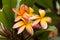 Stock Image : Interesting yellow flowers