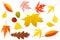 Stock Image : Inzameling van kleurrijke bladeren
