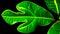 Irregular shaped leaves