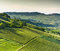Stock Image :  Italiaanse wijngaarden in Langhe, Piemonte