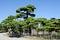 Stock Image :  Japanse tuin met pijnboombomen