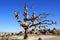 Stock Image :  Jarros en un árbol en Cappadocia, Turquía