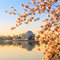 Stock Image : The Jefferson Memorial during the Cherry Blossom Festival
