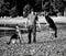 Stock Image : Jogo com os cães