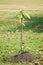 Stock Image : Jonge plant op de stapel van grond