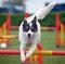 Stock Image : Jumping Dog