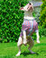 Stock Image : Jumping dog