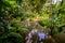 Stock Image : Jungle