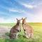 Stock Image : Kangaroo couple standing, looking at the camera. Australia