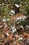 Stock Image : Katoenen gewas