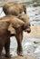 Stock Image : Kissing elephants