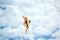 Stock Image : Kite