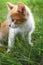 Stock Image : Kitten on green grass