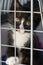 Stock Image : Kitten