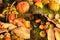 Stock Image :  Kleurrijke pompoenen