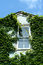 Stock Image : Klimop behandeld venster met hemel