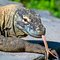 Stock Image : Komodo dragon