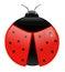 Stock Image : Ladybug
