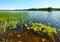 Stock Image : Lake summer view (Finland).