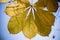 Stock Image : Last leaves on tree