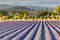 Stock Image : Lavender field in Provence
