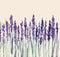Stock Image : Lavender flowers