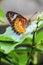 Stock Image : On Leaf