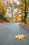 Stock Image : Leaf on road in autumn